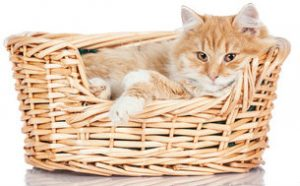 For some cats, the perfect cat bed is a basket