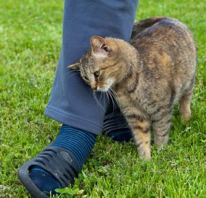 Cats rub around people's legs to mingle scents.