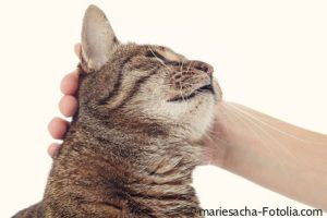 There are many reasons why cats purr