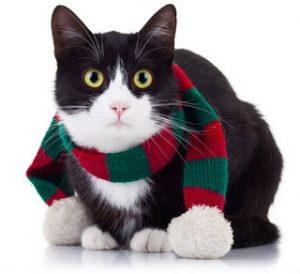Cats cope with cold weather in many ways, but one of them isn't wearing a muffler!