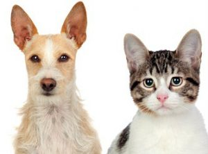 Cats and dogs can become close friends for life.