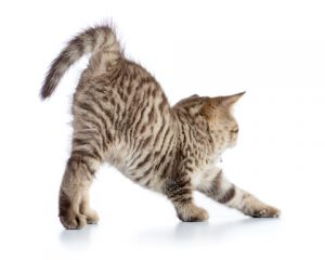 Cats need exercise as much as humans do.