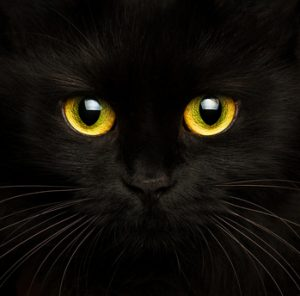 Where did all those myths about black cats come from?