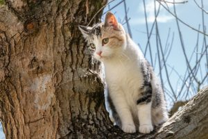 When cats get stuck in trees, blame their claws.