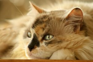 What to do if your cat has separation anxiety